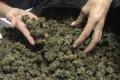 Sequestrati 200 kg di marijuana provenienti dall'est Europa