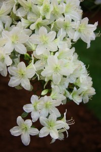 Fiore e piante a Euroflora 2011