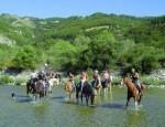 Equiraduno cavalli fiume