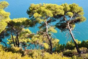 Il sentiero Mergoli-Vignanotica