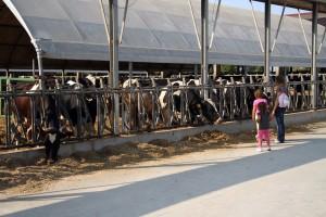 Cà de Alemanni – Azienda agricola biologica