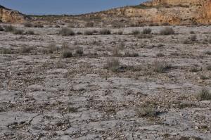 Passeggiata fra trentamila orme di dinosauri
