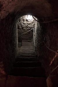 Ortigia sotterranea
