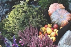 Festa della mela