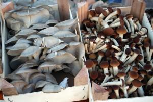 La festa del fungo