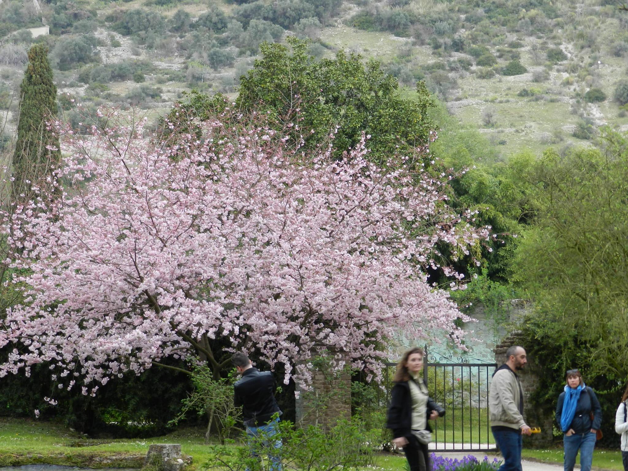 Il giardino di ninfa apertura straordinaria cisterna di for I giardino di ninfa