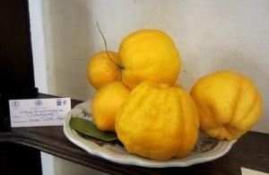 """""""La frutta negli studi dei Georgofili"""""""