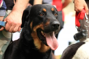 Dog-Show, pelosetti protagonisti