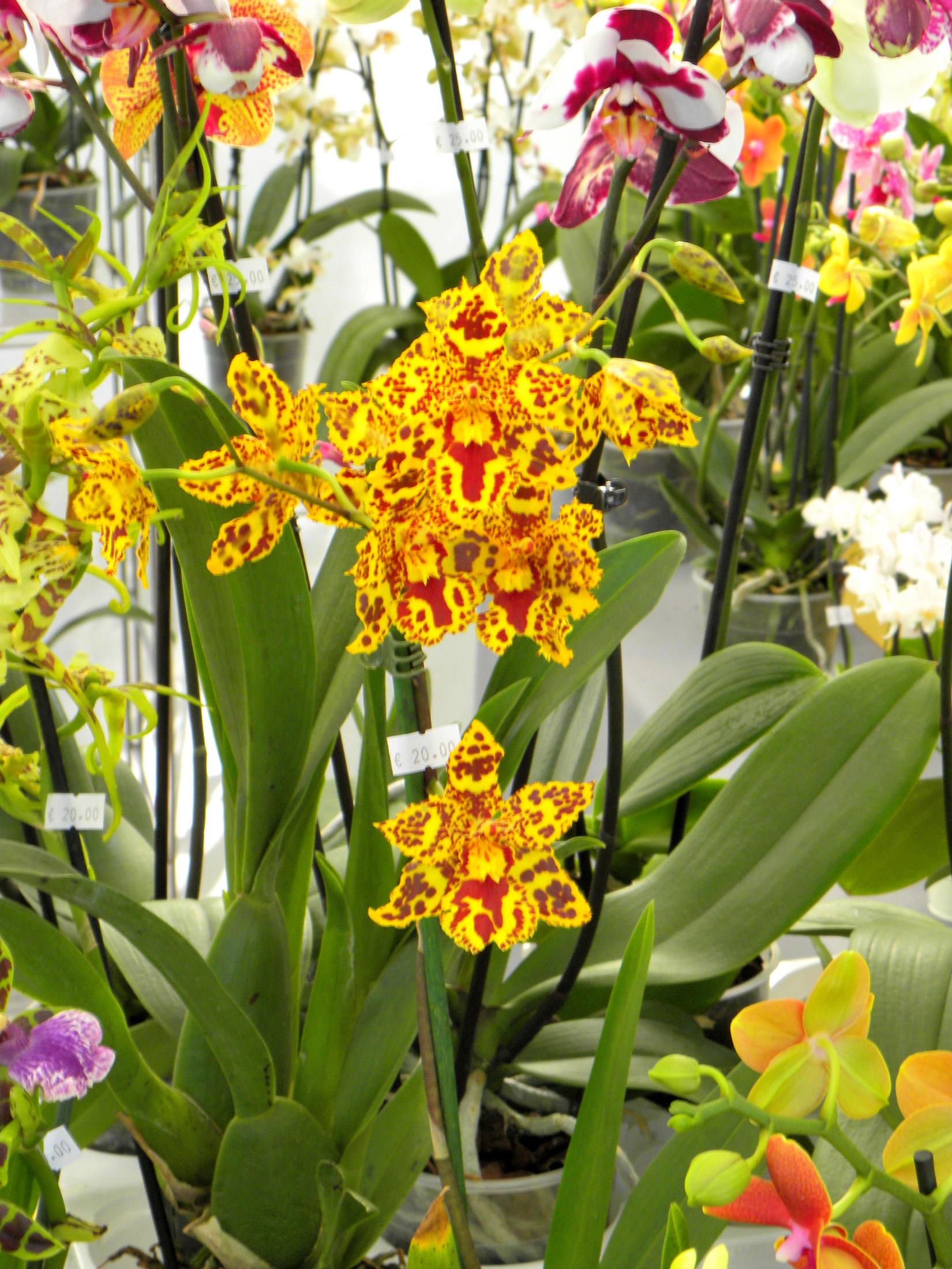 Mostra mercato delle piante rare e inconsuete perugia for Piante rare
