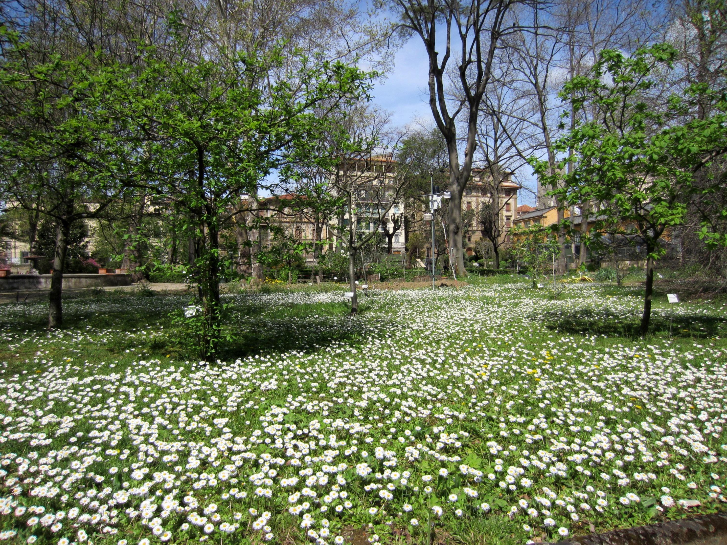 Primavera Al Giardino Dei Semplici Firenze Notizie