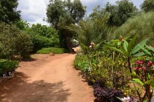 Il colore in giardino