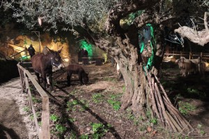 Presepe vivente nel quartiere dell'Ebraida