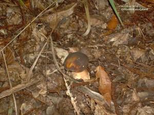Il maltempo anticipa la raccolta dei funghi