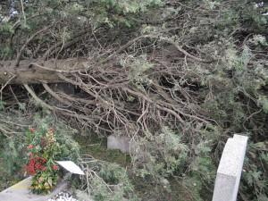 Quando il vento profana anche le tombe