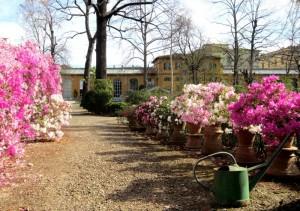 Il Giardino dei Semplici di Firenze