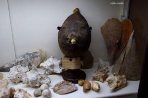 """Giornate FAI 2016 – Museo Orientale """"Umberto Scerrato"""""""