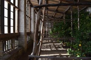 Giardini d'agrumi