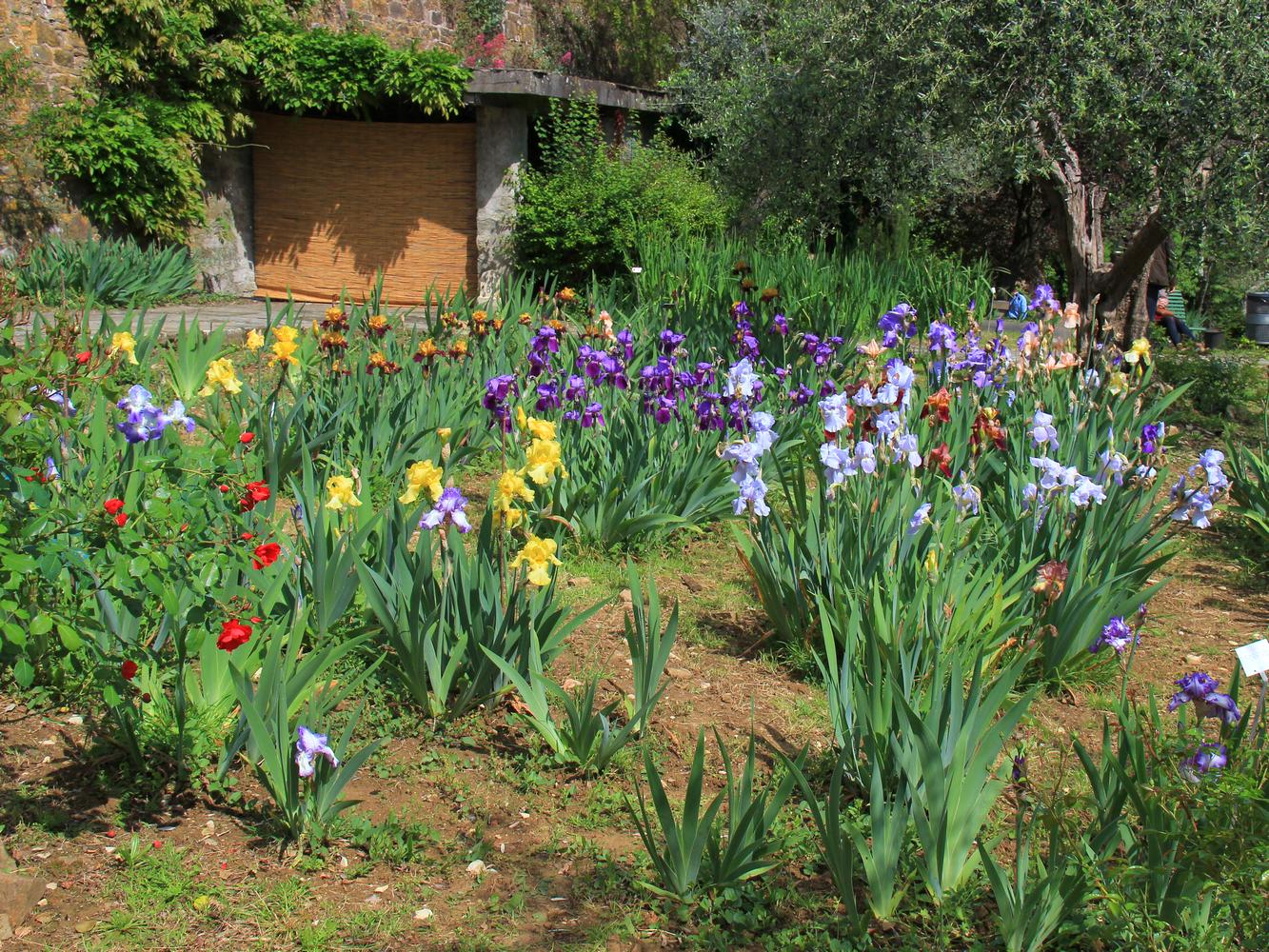 Il giardino dell iris firenze notizie - Giardino dell iris firenze ...
