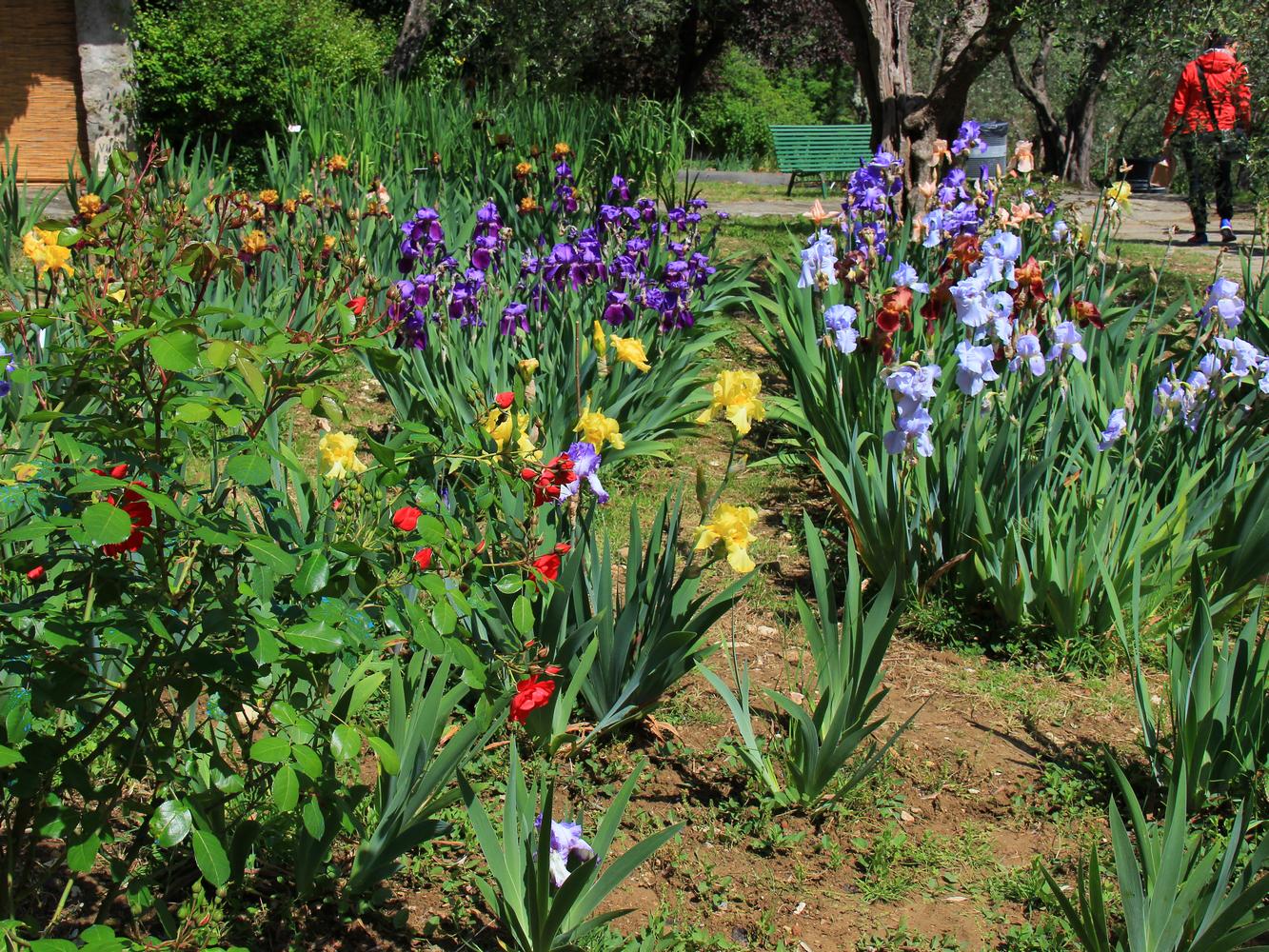Vialetti da giardino con fiori particolari da giardino for Fiori particolari da giardino