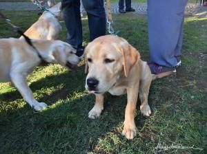 Open day della Scuola Cani Guida