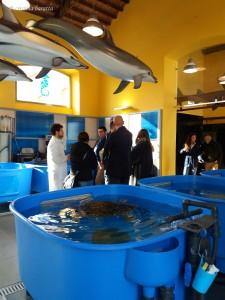 Il Centro Tartarughe Marine più grande del Mediterraneo