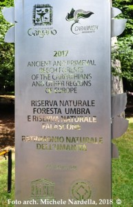 Primo anniversario delle faggete della Foresta Umbra nel patrimonio naturale Unesco