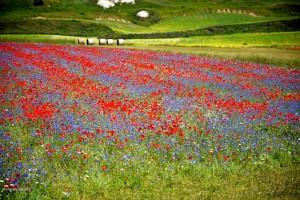 Castelluccio di Norcia: la Fiorita
