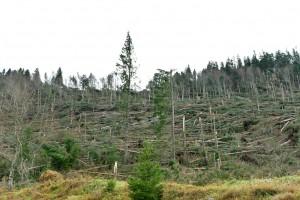 I boschi che non ci sono più